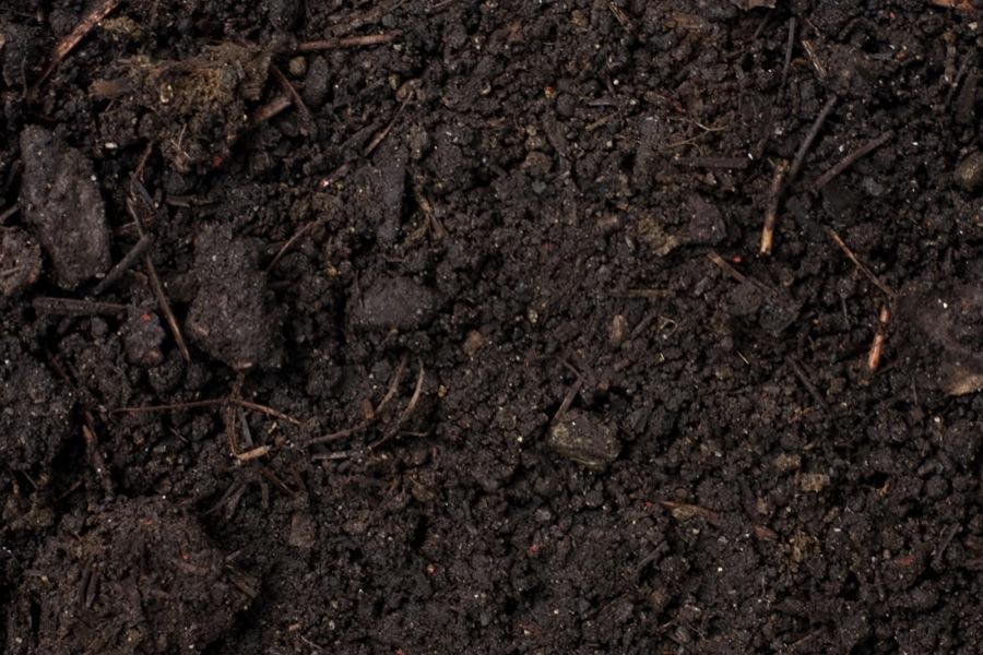 2015: International Year of The Soils